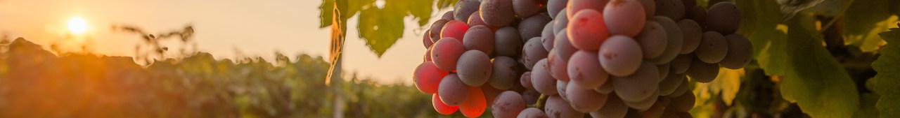 Grape Concentrate